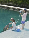 Trainers work with dolphins at Dolphins Pacific, Palau, Micronesia.