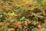 Leaves lie on ground, saturated with autumn colors.