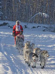 Dog sled racer on Yukon Quest course