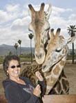 Woman feeds acacia leaf to giraffes