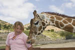 Girl has fun with giraffes while feeding them