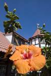Hibiscus flower in Swakopmund, popular tourist town on central Namibia coast.