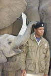 Elephants and a handler at Camp Jabulani, upscale safari game park near Hoedspruit, South Africa.