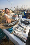 Fisherman sells fresh caught fish in early morning at