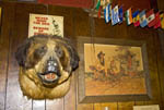 Head of former pet dog hangs on wall of Shooting Star Saloon in Huntsville, Utah.