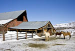 Farm with barn and horses during winter in Eden, Utah