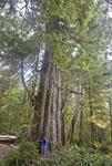 Camper measures herself against large tree in the Broken Group Islands of British Columbia.