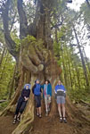 Campers measure themselves against a western red cedar in Pacific Rim National Park Vancouver Island, Canada.