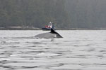 Whale watching boat approaches as humpback whale (Megaptera novaeangliae) surfaces in Pacific Rim National Park, Canada.