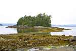 Land bridge leads to small island during low tide at Willis Island in the Broken Group Islands of Pacific Rim National Park on the west coast of Vancouver Island, Canada.