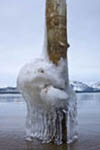 Icicles dripping from pole in shallow water of Lake Tahoe at dawn, South Lake Tahoe, Nevada, USA.