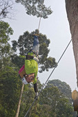 One of several 'drops' on ziplines at canopy tour