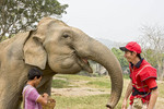 Tourists learns how to greet & feed 'his' elephant at Patara, elephant rescue farm