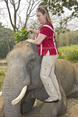 Woman visitor brushes dirt off the back of 'her' elephant elephant rescue farm