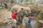 Men wash elephant in a shallow creek at Patara Elephant Farm