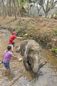Men wash elephant in a shallow creek at Patara Elephant Farm