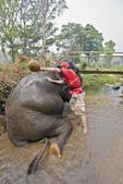 Tourist man washes elephant at elephant rescue farm