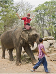 Tourist triumphantly rides elephant after climbing onto its head