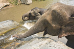 Elephants play in gushing water at waterfall