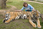 Visiting tourist hugs tigers under supervision of trainers