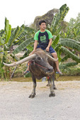 Local men herd water buffalo near Chaing Mai, Thailand.