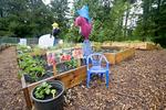 P-Patch garden in suburban neighborhood