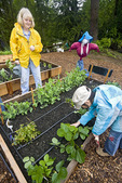 Woman and 9-year-old girl work in community P-Patch garden