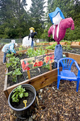 Nine-year-old girl works in community P-Patch garden