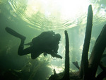 Scuba diving into Chac Mool, one of the cave systems on the Yucatan Peninsula of Mexico. The openings are known as cenotes.