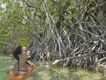 Woman inspects mangrove plants in canal at Sian Ka'an Biosphere Reserve in Riviera Maya.