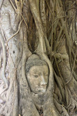 Buddha head encircled by tropical tree roots at Wat Mahathat, in Ayutthaya, Bangkok, Thailand