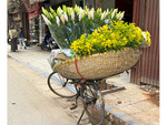 Bicycle with basket of flowers, a typical street scene in historic old quarter of Hanoi, Vietnam.