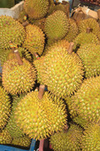 Durian, a sweet Asian fruit with a strong odor that some non Asians think smells like rotting meat