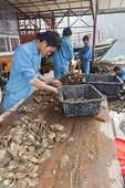 Workers clean oysters at Pearl Tourist Village floating in Ha Long Bay, Vietnam.