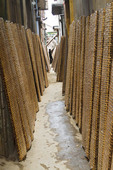 Rice paper (used in cooking) dries on bamboo racks leanding against buildings in narrow alley  in Tho Ha village, near Hanoi, Vietnam.