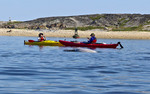 Women photograph beluga whales while kayaking on the Churchill River just off Churchill, MB, Canada.