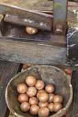 Early tool used to crush & open macadamia nuts. A lever is pulled down to crush the nut.  Molokai, Hawaii, USA.