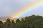 Rainbow behind coconut trees, Molokai, Hawaii, USA.