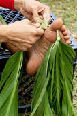 Local man uses his feet and toes to make a traditional lei from shreaded ti leaves in Halawa Valley, Molokai, Hawaii, USA.