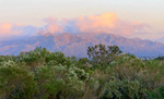 Santa Catalina mountains at dusk, seen from Tucson, AZ.