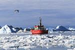 Fishing boat in ice choked harbor of Disko Bay at Ilulissat, Greenland, summer.