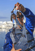 Clear glacial ice held by man who just plucked it from ice choked Disko Bay at Ilulissat, Greenland.