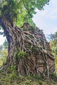 Tree roots swallowing temples of Sambor Prei Kuk, 17 miles from Kompong Thom near Angkor Wat