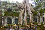 Ta Prohm at Angkor in Cambodia, also called the jungle temple because its buildings are slowly being covered by the roots of spung trees.