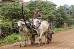 Man drives ox cart on Koh Dach, a rural island off Phnom Penh, Cambodia.