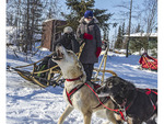 Sled dogs howl in anticipation of a good run at Wapusk Adventures dog sledding operation in Churchill, Manitoba, Canada.