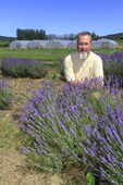 Executive Chef Brian Scheehser with blooming lavender on his farm that he uses for his gourmet recipes at Trellis Restaurant in Kirkland, WA.