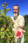 Executive Chef Brian Scheehser with ripe raspberries at his farm. He uses them in his gourmet recipes at Trellis Restaurant in Kirkland, WA.