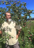 Executive Chef Brian Scheehser with ripening Liberty apples at his farm. He uses them in his gourmet recipes at Trellis Restaurant in Kirkland, WA.