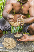 Local man squeezes bamboo strips with kava root inside to make kava drink (also called sakau). The liquid streams into a coconut shell cup. The pounded kava root was mixed with water and is sitting on the rock and looks like a mound of wet straw. The resulting liquid is popular on Pacific islands and is mildly relaxing.